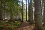 Local Woodland Walks Benderloch