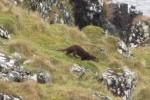 Resident Otter