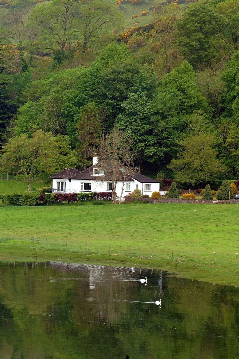 Swans on Loch Feochan